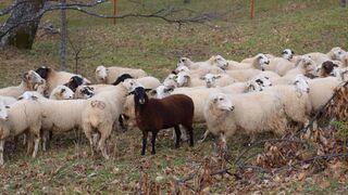 Los peritos y sus ovejas negras