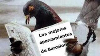 Barcelona declara la guerra a las palomas por dañar la chapa de los coches