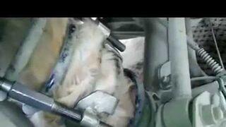 Mecánico encuentra un gato atrapado en la suspensión