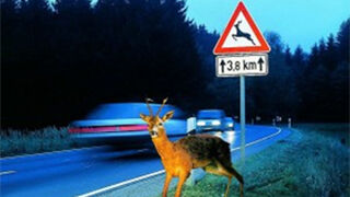 Línea Directa ofrece cubrir daños causados por accidentes con animales