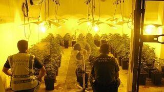 Una plantación de marihuana, en una cabina de pintura