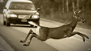 El coste medio de las reparaciones por colisiones con animales de caza es de 1.155 €