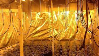 Los Mossos localizan 260 plantas de marihuana en un taller de Girona