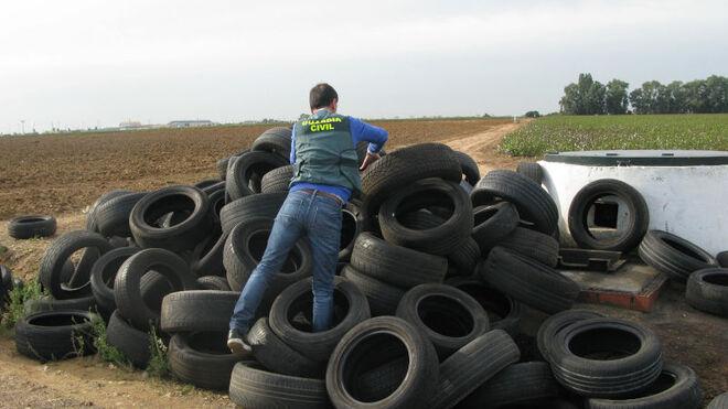 CAPA Neumáticos recoge 163 neumáticos en un cementerio ilegal de Sevilla