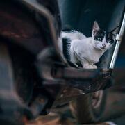 Trasladan en grúa un coche a un taller de Valladolid para sacar un gatito del motor
