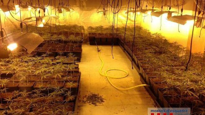 Detenidos dos hombres en Girona por cultivar mil plantas de marihuana en un taller ilegal