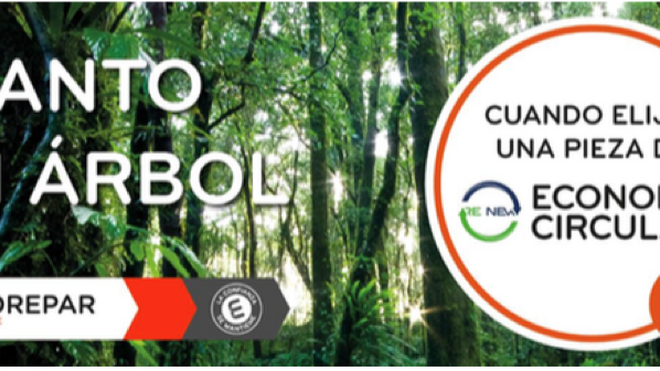 Eurorepar lanza una campaña para reforestar los manglares de Senegal