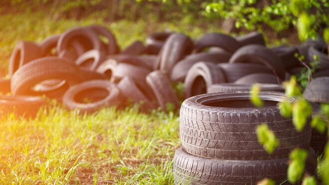 TNU destaca el reciclaje de neumáticos en la protección del medio ambiente y la biodiversidad